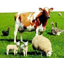 Профилактика болезней животных