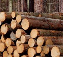 О заключении договоров купли-продажи лесных насаждений для собственных нужд граждан