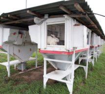 «Основы технологии разведения кроликов в условиях малых форм хозяйствования»