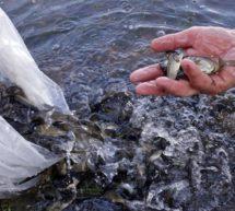 О противодействии незаконному обороту водных биоресурсов.