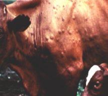 Б Р У Ц Е Л Л Ё З — опасное заболевание человека и животных.