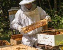 Внимание пчеловодов Новоджерелиевского сельского поселения!