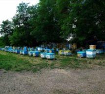 Информация для пчеловодов!