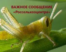 СИГНАЛИЗАЦИОННОЕ СООБЩЕНИЕ филиала ФГБУ «Россельхозцентр» по Краснодарскому краю!