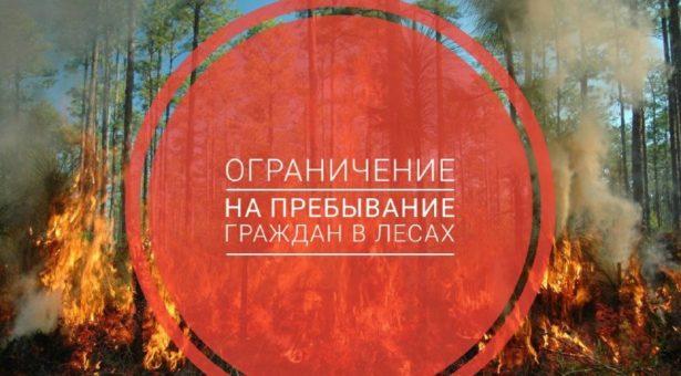 В краснодарском крае ограничили пребывание граждан в лесах