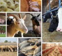О приобретении племенных и товарных животных